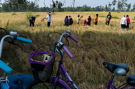 Schoolchildren harvesting