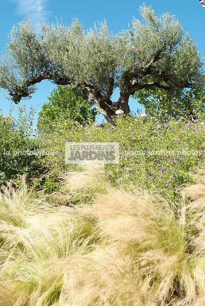 La Phototheque Les Plus Beaux Jardins Massif Stipa Tenuifolia