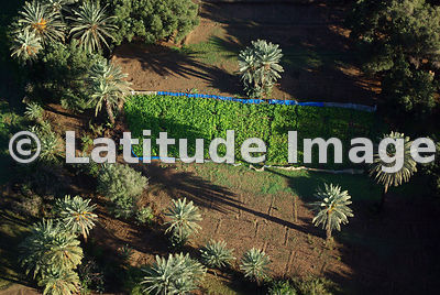 Planting Inside Palm Groves, Southern Morocco