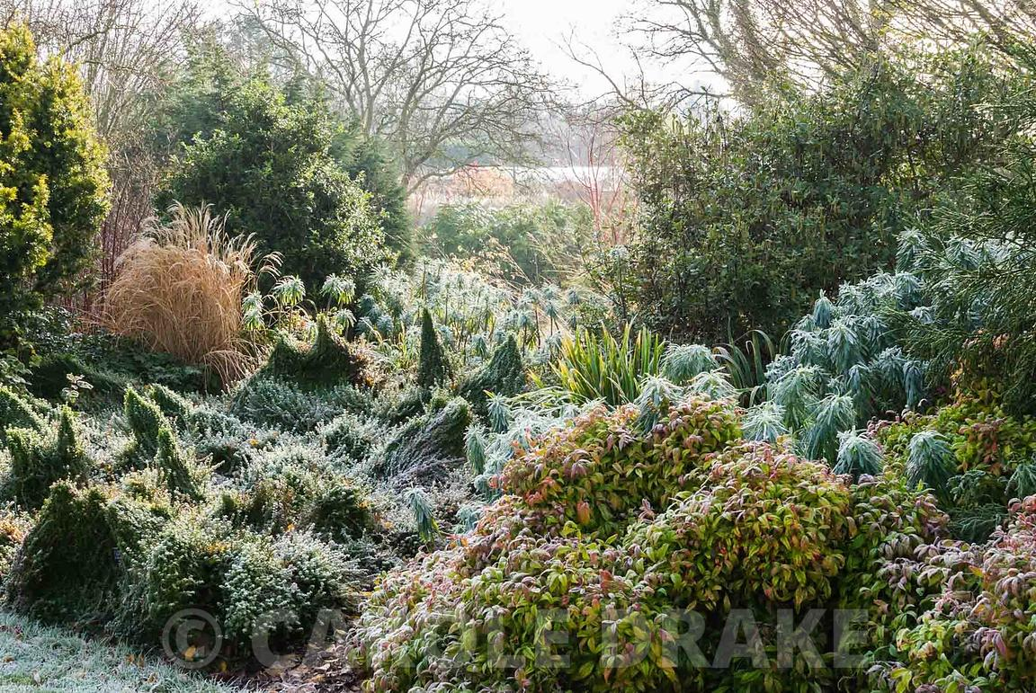 carole drake frosted border in the winter garden includes