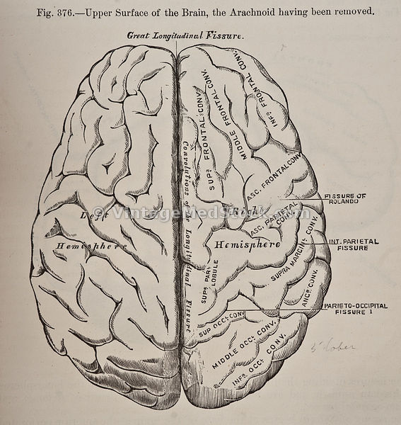 brain mind and medicine essays in eighteenth-century neuroscience Download the brain, mind and medicine - essays in eighteenth-century neuroscience - harry whitaker (springer, 2007) torrent or choose other brain, mind and medicine.