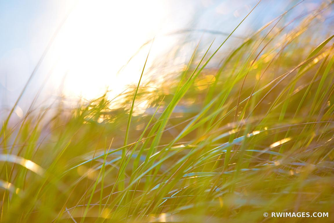 Photo Print of CAPE COD AUTUMN GRASSES NATURE ABSTRACT COLOR Print ...