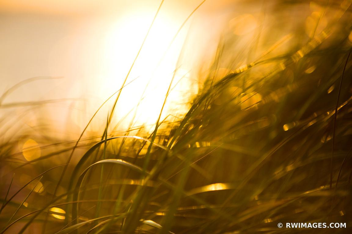 Photo Print of CAPE COD AUTUMN GRASSES SUNSET NATURE ABSTRACT COLOR ...