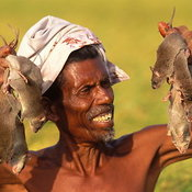 Rat Catchers of Madras photos