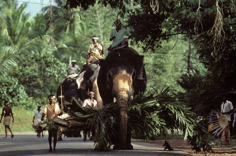 Michael Freeman Photography   Elephant on road