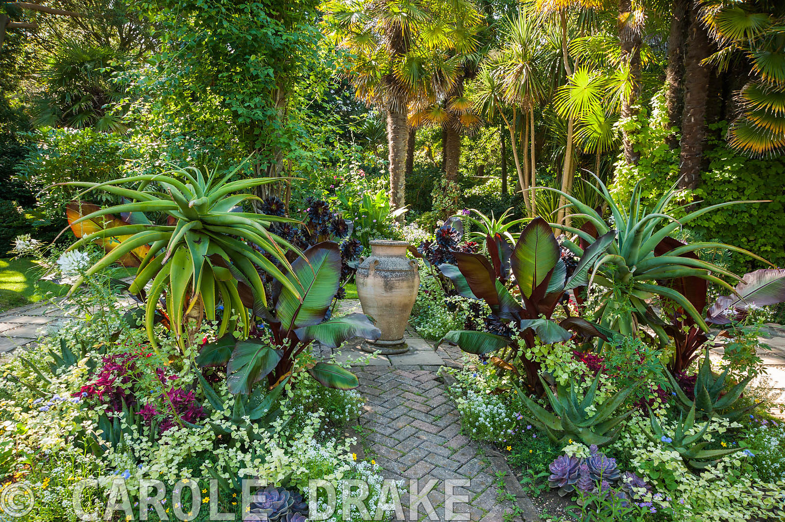 Carole drake exotic bedding in the victorian garden for Victorian garden trees