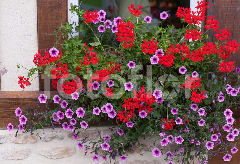 Photo de Jardinière de fleurs d\'été, mélange - fotoflor - grand ...