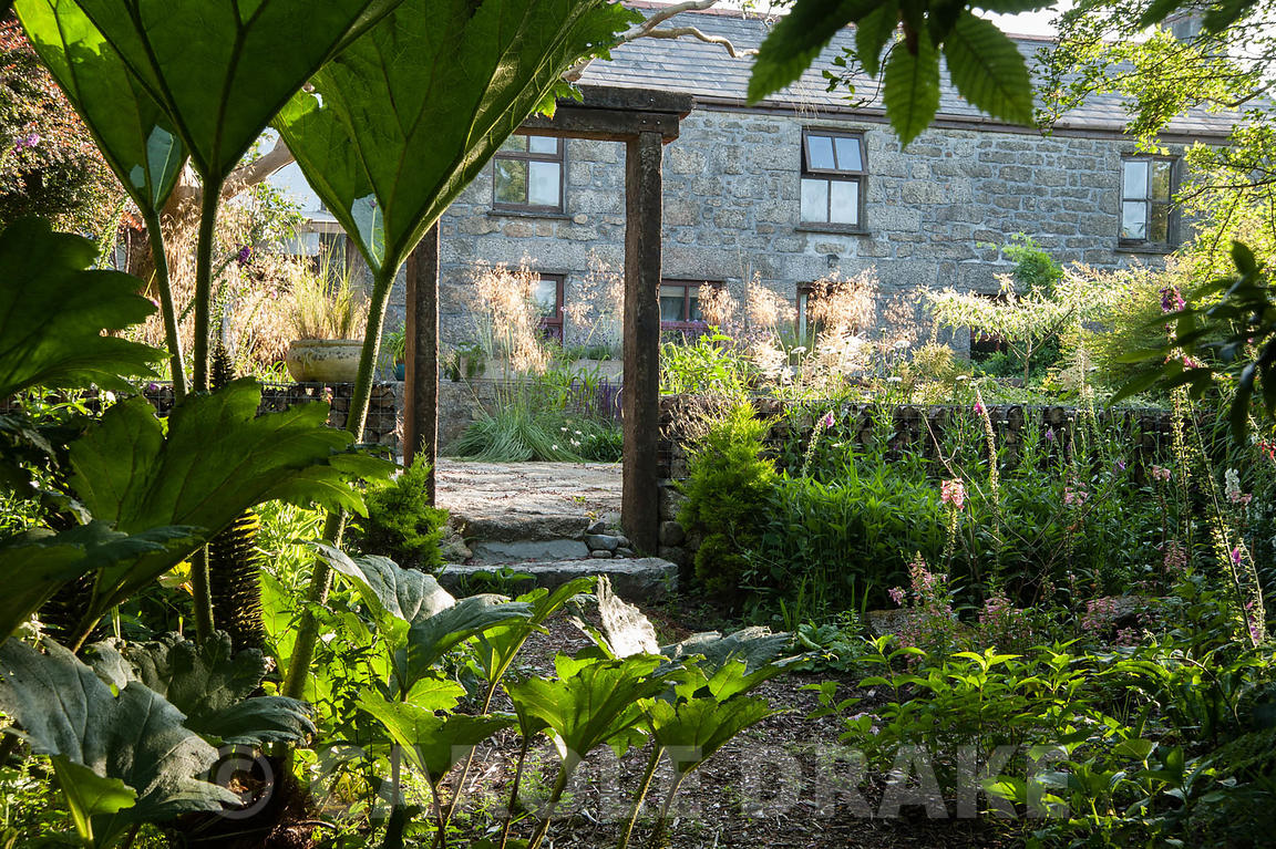 CAROLE DRAKE | Tall Gunnera Frames A View From The Woodland Edge Of The  Garden, With Foxgloves And Ferns, Up To The Terrace Beside The House Framed  By ...