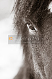Close ups of a horse&#x27;s head in a snowy field