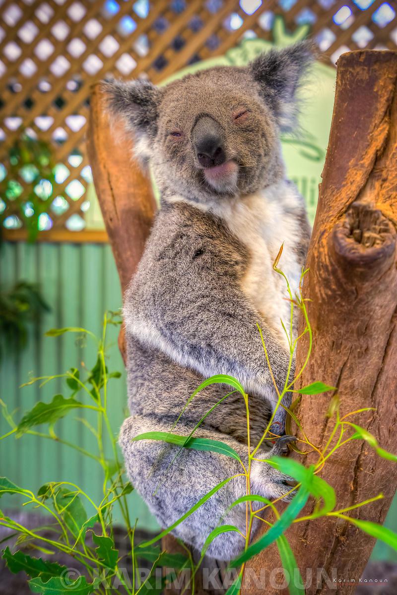 Cute smiling kuala