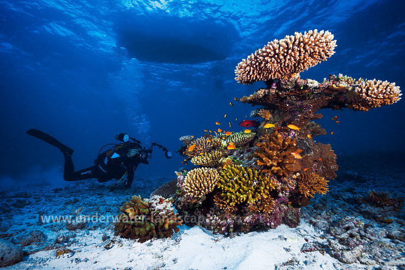 underwater photographer near reefs in the mayotte island lagoon