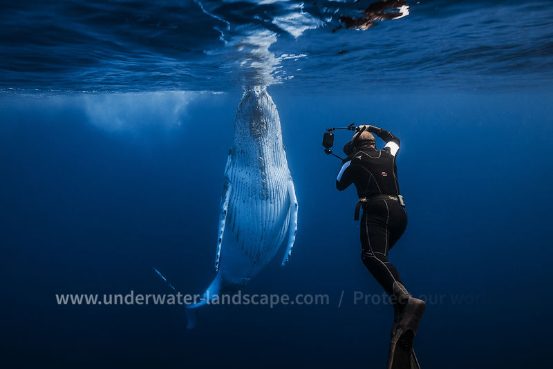 humpback-whales-gabriel-barathieu-underwater-photographer-of--the-year