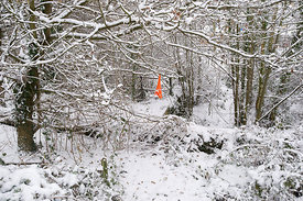 Orange bag in snowy woodland