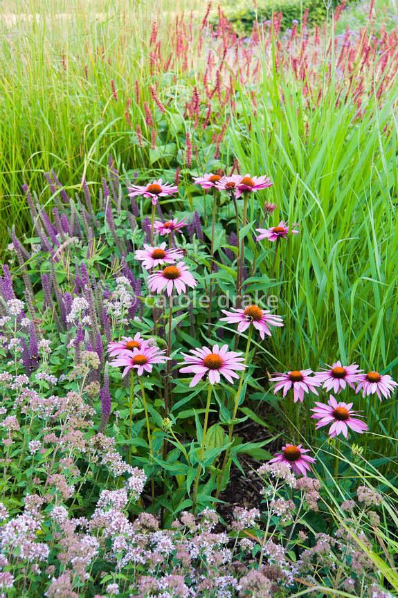 Carole Drake The Barn Garden Is A Mix Of Grasses And Late