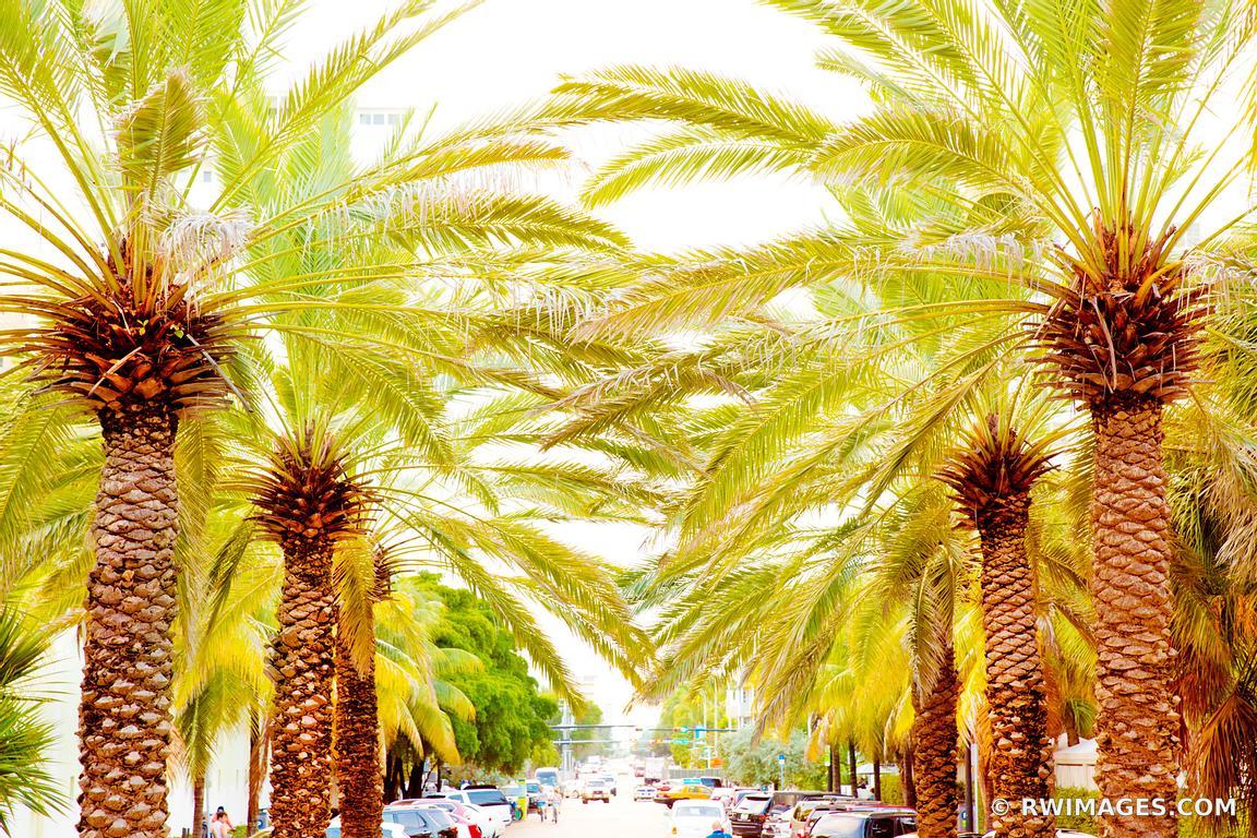 Photo Print of PALM TREE LINED STREET MIAMI BEACH FLORIDA Print ...