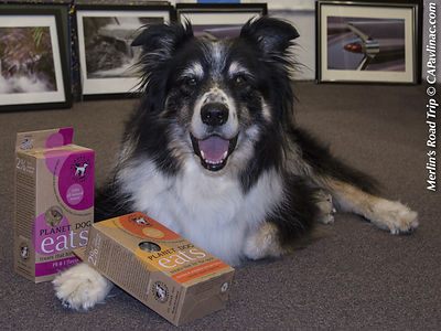 Merlin dispenses Planet Dog treats at the studio