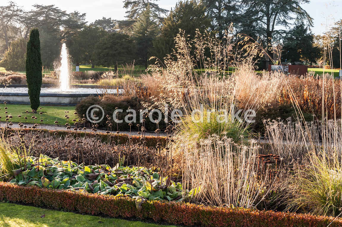 CAROLE DRAKE | Box edged beds in the Italian Garden are planted with ...