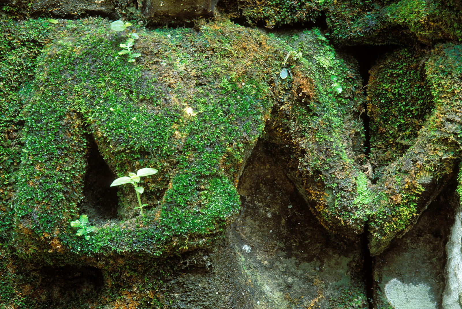 Moss-covered apsara