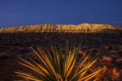 Yucca plant and mountains at night, Red Rock Canyon National Conservation Area, Nevada, USA