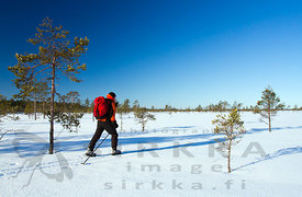 Skiing in the Kauhaneva Mire