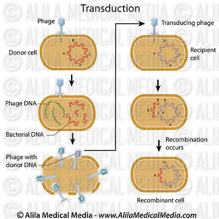 Alila Medical Media Genetic Transduction Labeled Diagram
