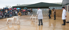 Capt. Ian Farquhar MFh and Capt. Brian Fanshawe judge the Cottesmore puppy Show as Neil Coleman shows hounds