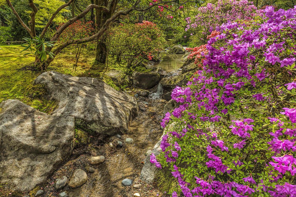 Lee Rentz Photography | Azaleas Blooming in Spring in Seattle\'s ...