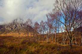 Trees below Stob Dearg