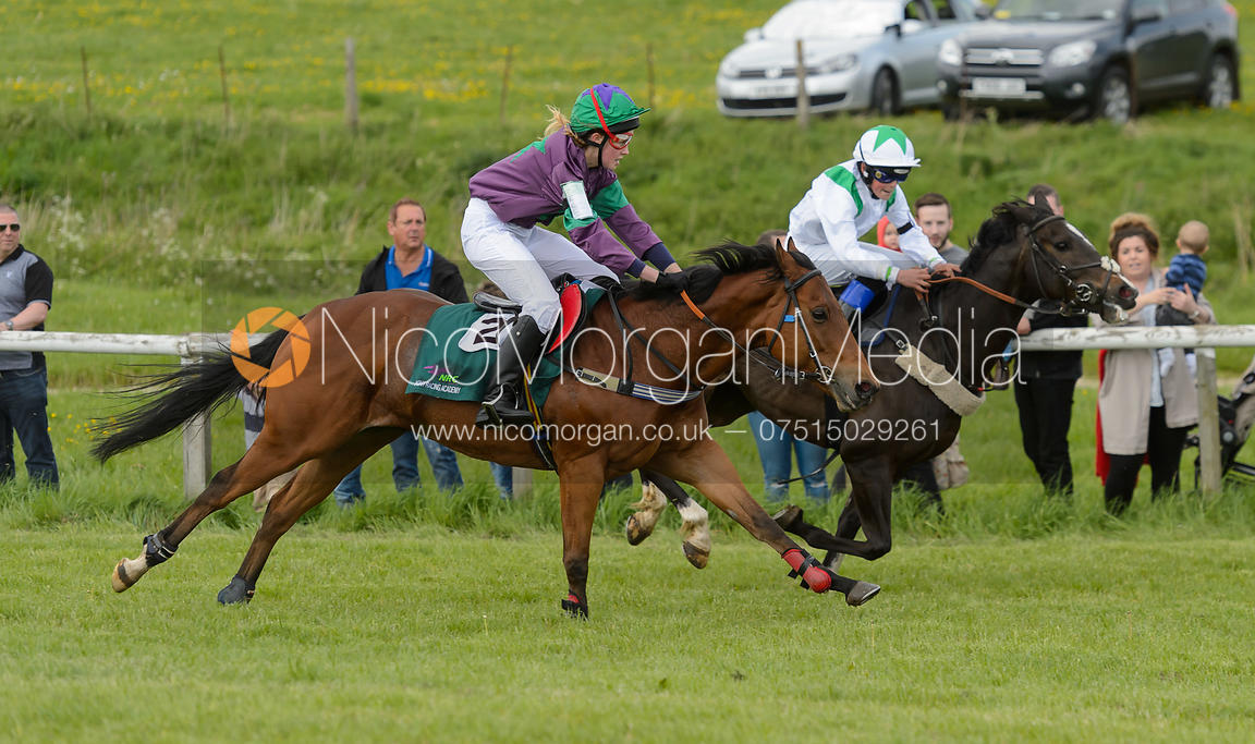 Image Pony Race 1 The Melton Hunt Club Point To Point