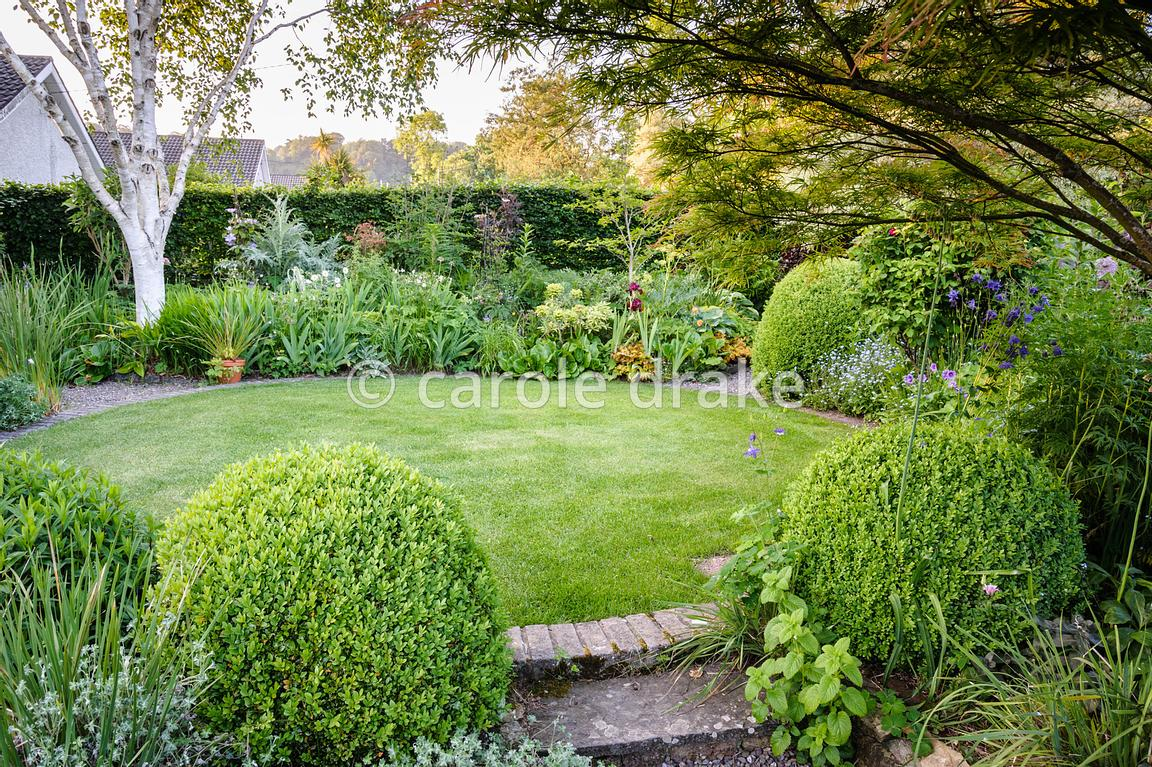 Circular Lawn In The Back Garden Framed With Clipped Box Spheres, Acer  Palmatum U0027Villa