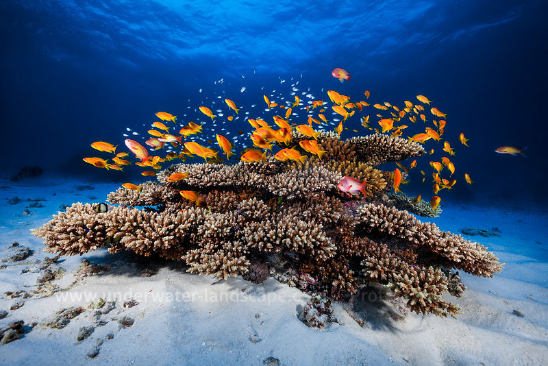 underwater photography or fish and corals in the mayotte island lagoon