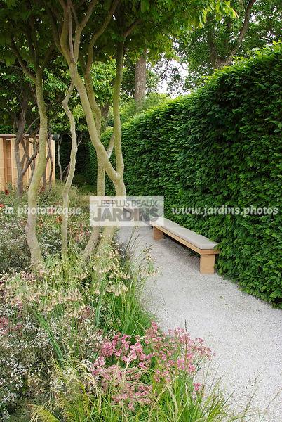 la photothèque   LES PLUS BEAUX JARDINS   Jardin contemporain. Haie ...