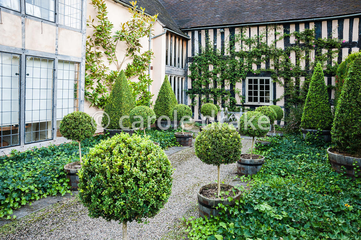 Courtyard Beside C16th House With Clipped Box Topiary And Ground Cover Ivy.  Wollerton Old Hall