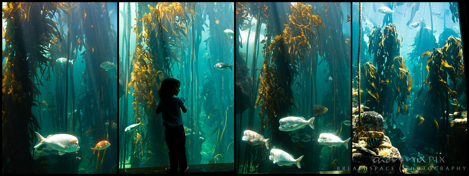 Freshwater aquarium fish cape town - Two Oceans Aquarium Cape Town South Africa A Little Girl Looks Through The