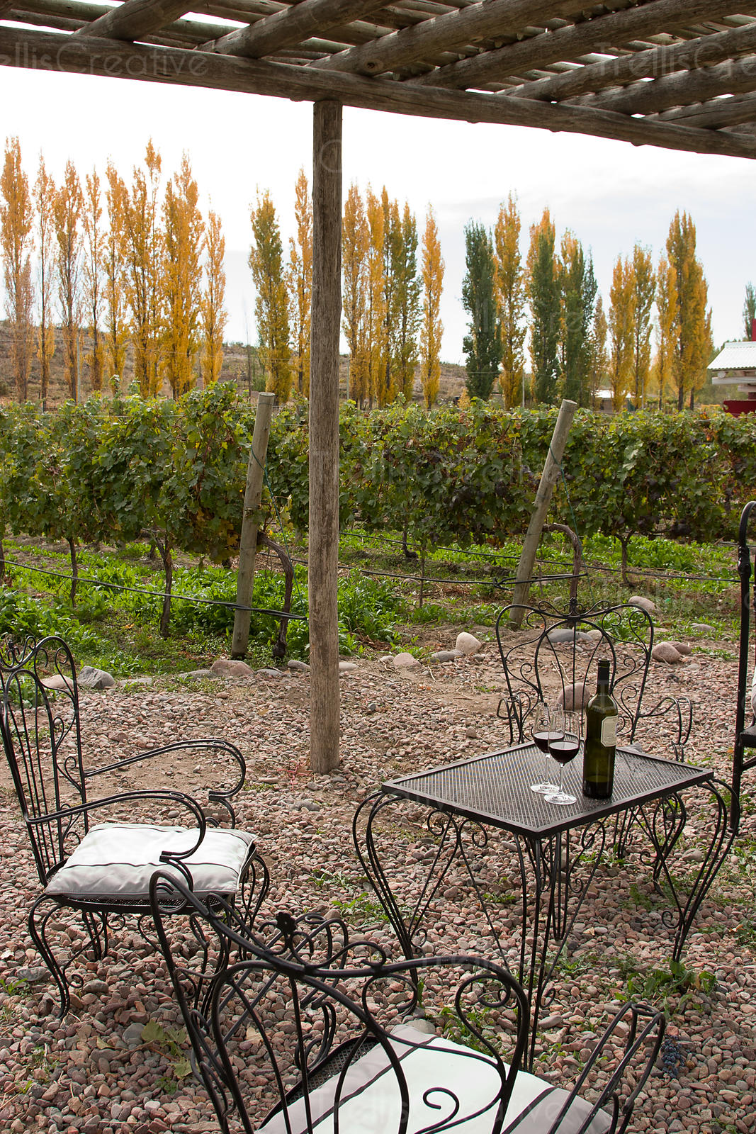 Patio Table Setting Under Trellis, Vineyards Beyond Edge Of Gravel Patio,  Red Wine And