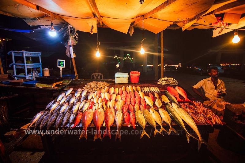 photo voyage au sri lanka-pecheur dans la mer au sri lanka-Pêche du jour!