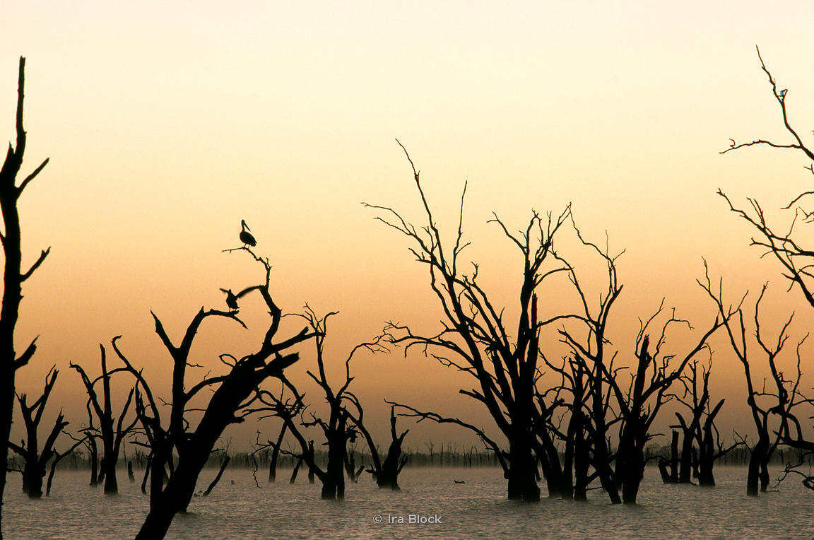 Ira Block Photography   Kow Swamp, Australia