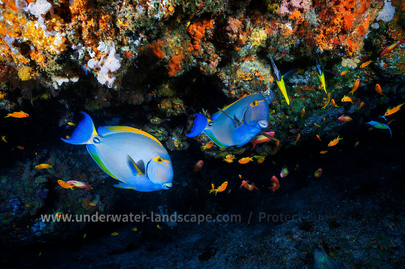 Mozambique under water: scuba diving photography-fauna and flora- multicolor fish