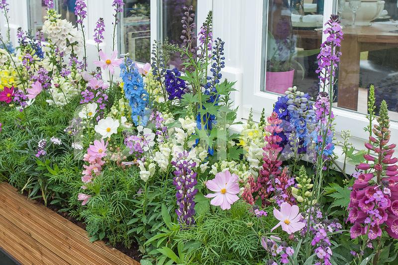 photo de jardini re fleurie jardini re estivale. Black Bedroom Furniture Sets. Home Design Ideas