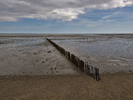 Shore lines, East Mersea