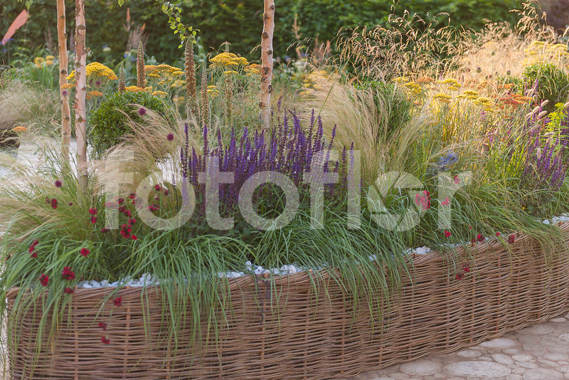 Photo de Salvia,dianthus,Bordure tressée de plantes vivaces et ...