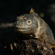 Galapagos photos