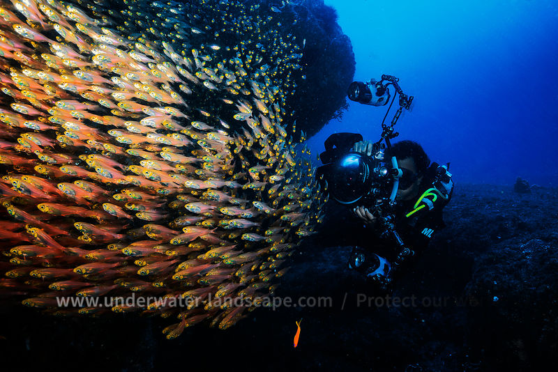 Mozambique under water: scuba diving photography-fauna and flora-Glasfish and diver photographer with flash