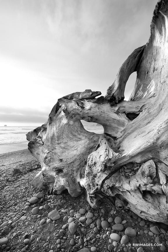 Photo print of driftwood rialto beach olympic national for Photography prints to buy