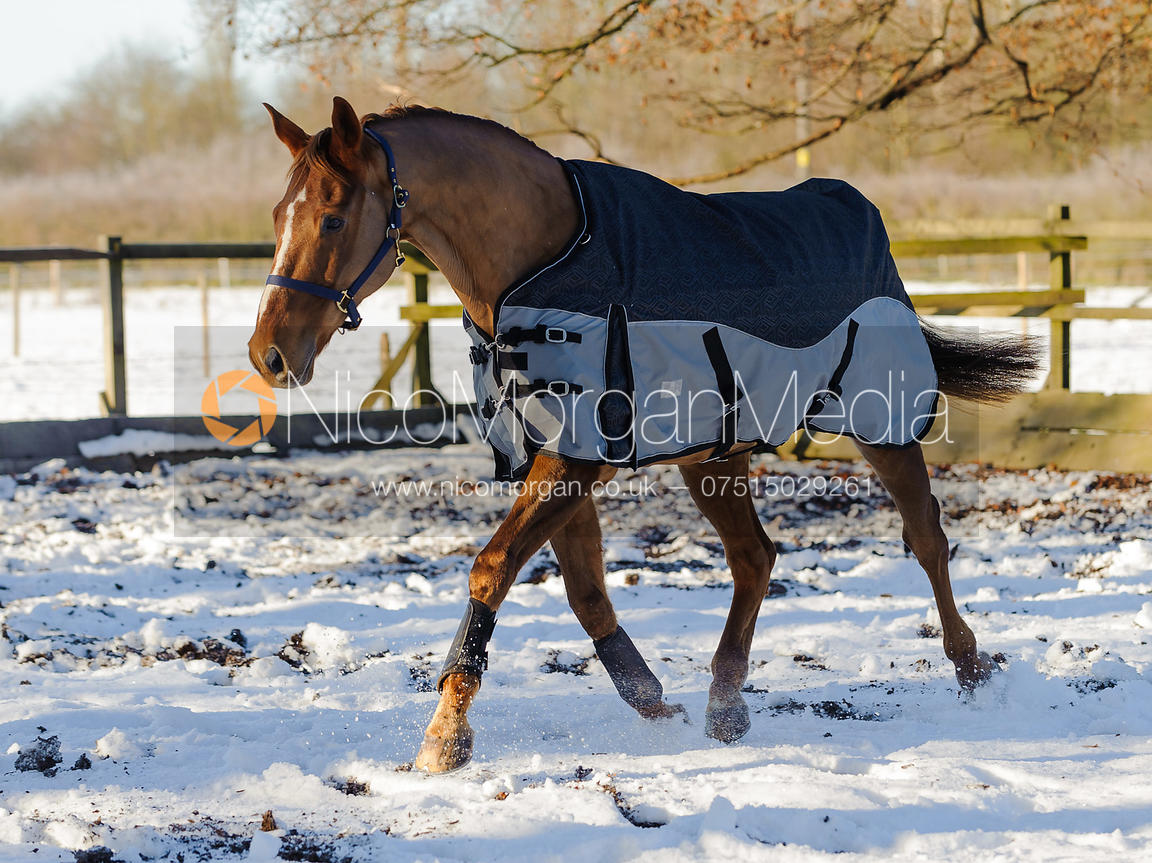 Image Equestrian Stock Images Of Horses And Horse Rugs In The Snow