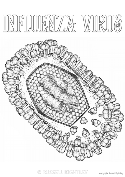 russell kightley premium scientific pictures medical scientific colouring pages rights managed - Pictures Of Colouring