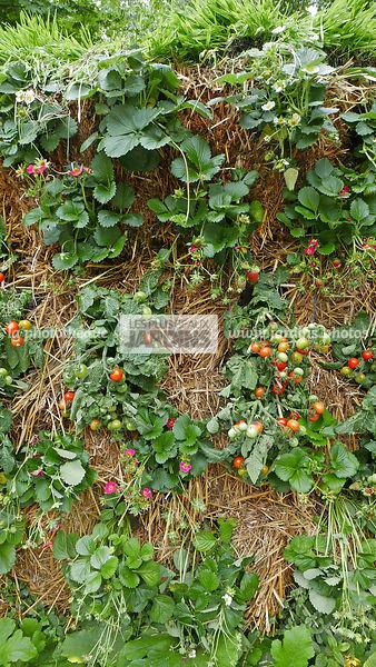 La phototh que les plus beaux jardins culture sur - Culture sur botte de paille ...