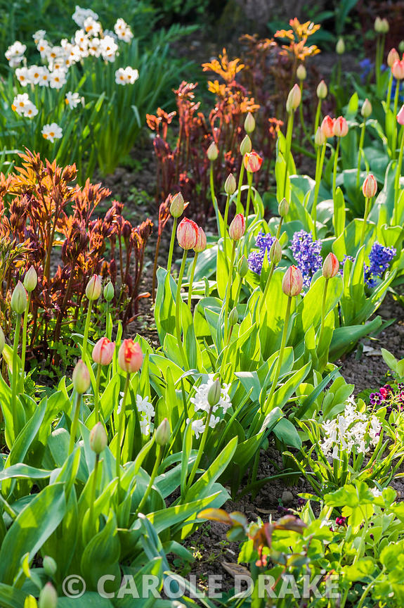 CAROLE DRAKE   Rows of flowering plants in the cutting garden ...