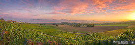 La Cte vineyards at sunset