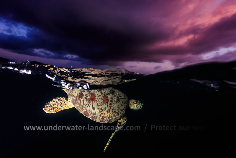 night photo of a sea turtle in the mayotte island lagoon